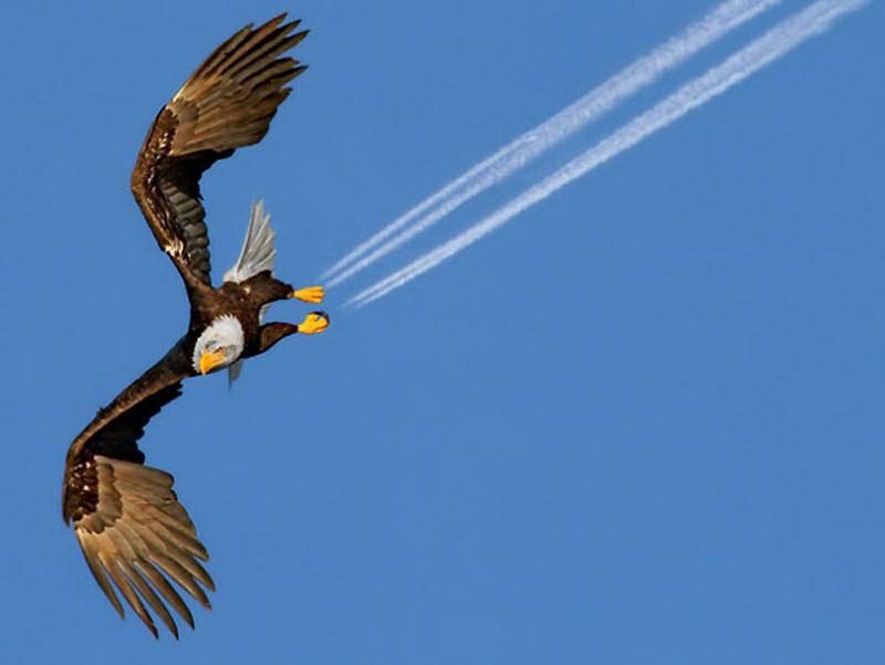 eagle perfect timing