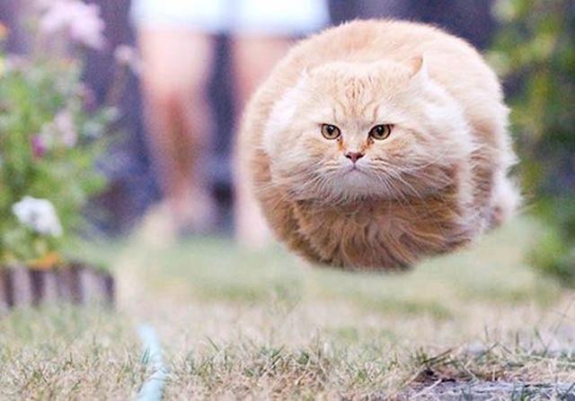 CAT MISSILE.