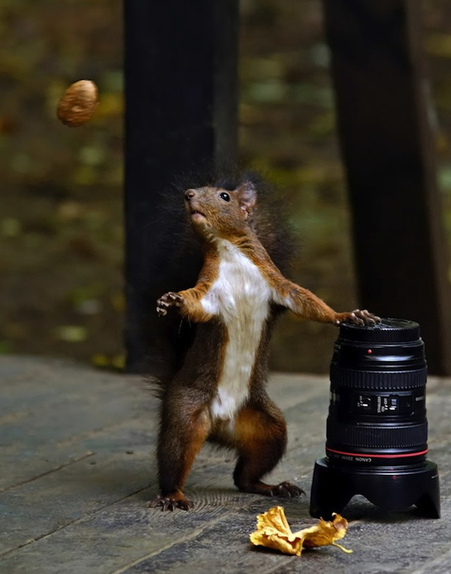 OH YEAH, HERE COMES A NUT.