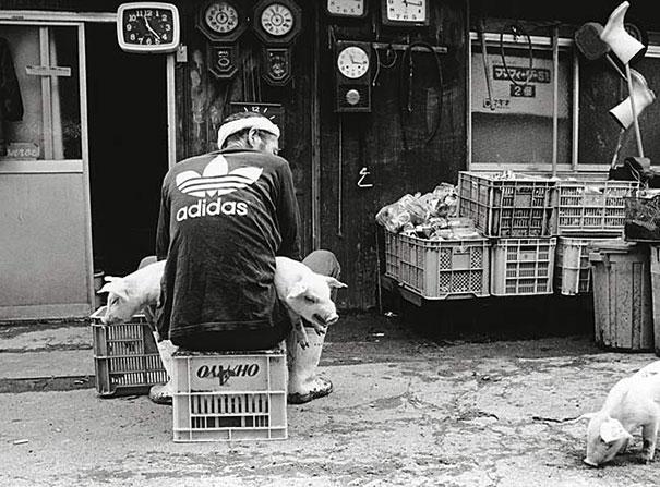 otchan-cute-pig-farmer-toshiteru-yamaji-10