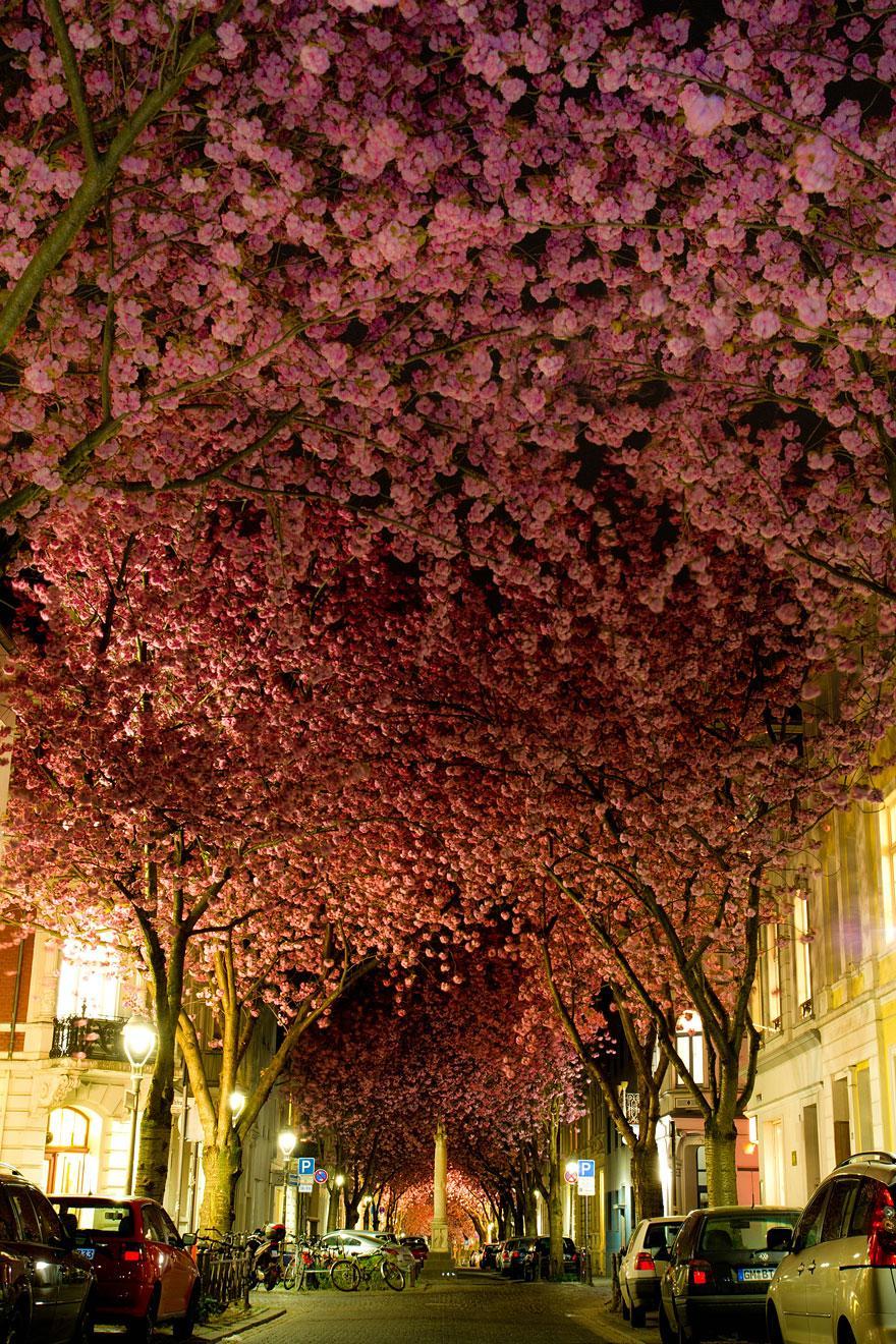 03 - Street in Bonn Germany