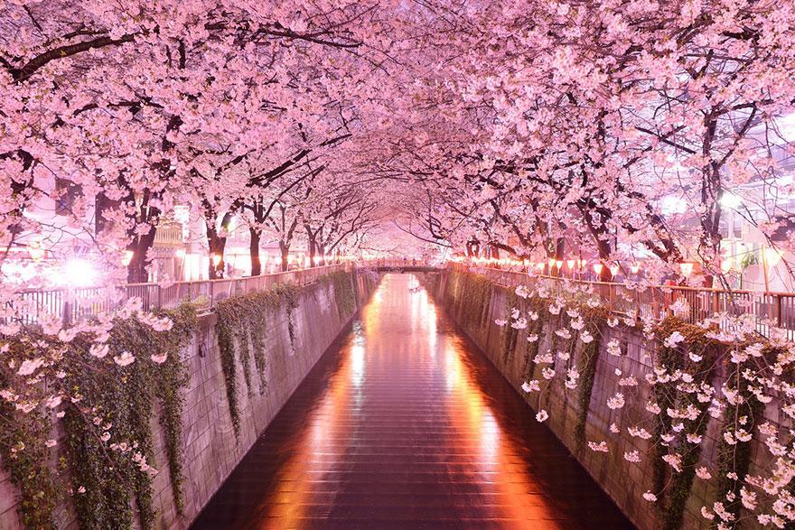 17 - Sakura Tunnel Japan