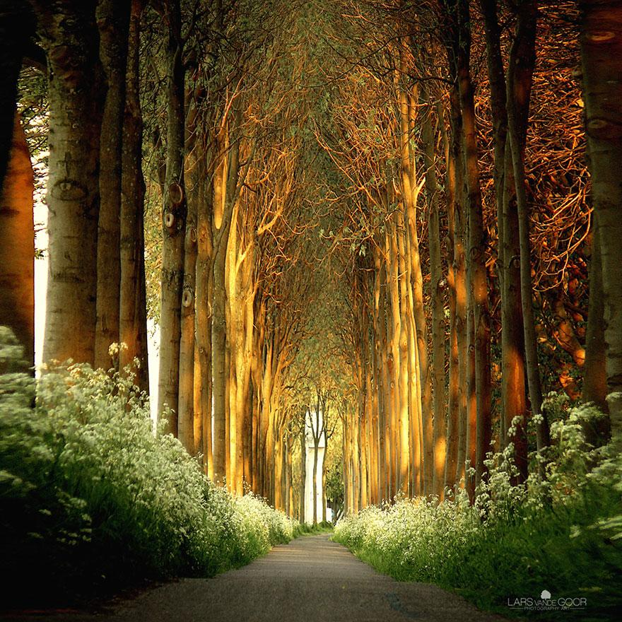 18 - Tree Tunnel in Netherlands