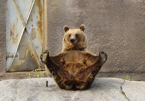 funny-animals-doing-yoga-21