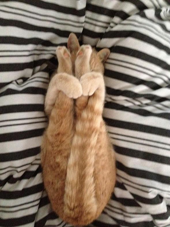 funny-animals-doing-yoga-5