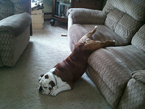 funny-cats-dogs-stuck-furniture-18