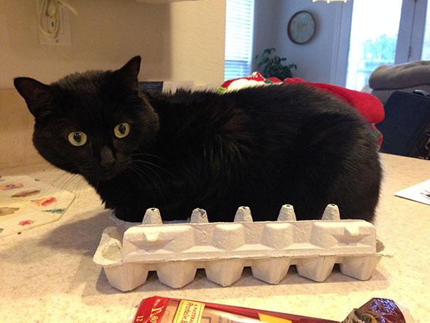 funny-cats-if-it-fits-i-sits-2