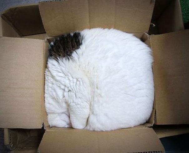 funny-cats-if-it-fits-i-sits-6