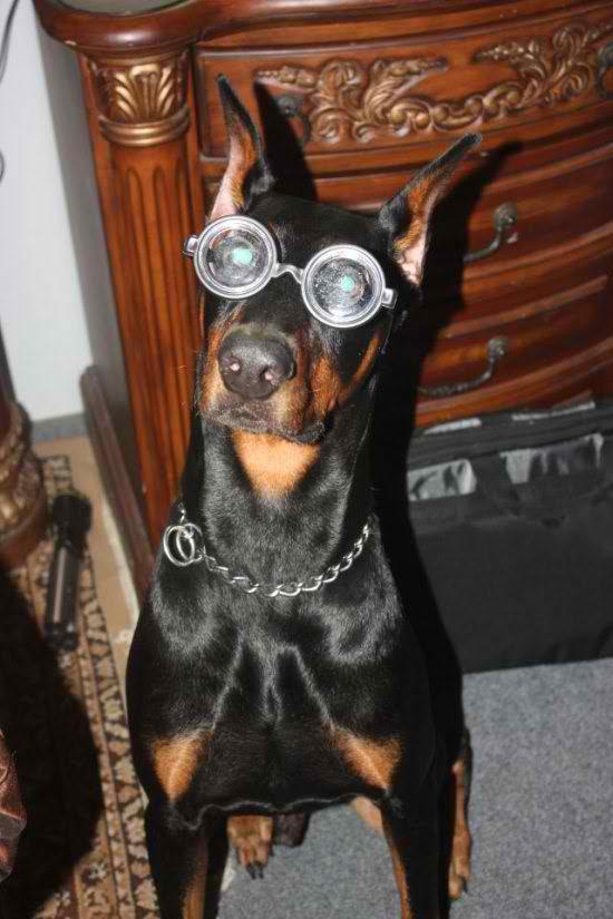 life-ruff-get-dog-101