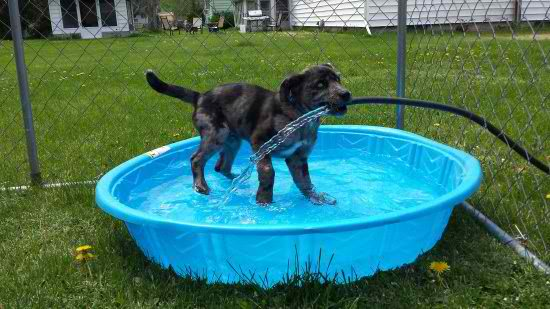 life-ruff-get-dog-171