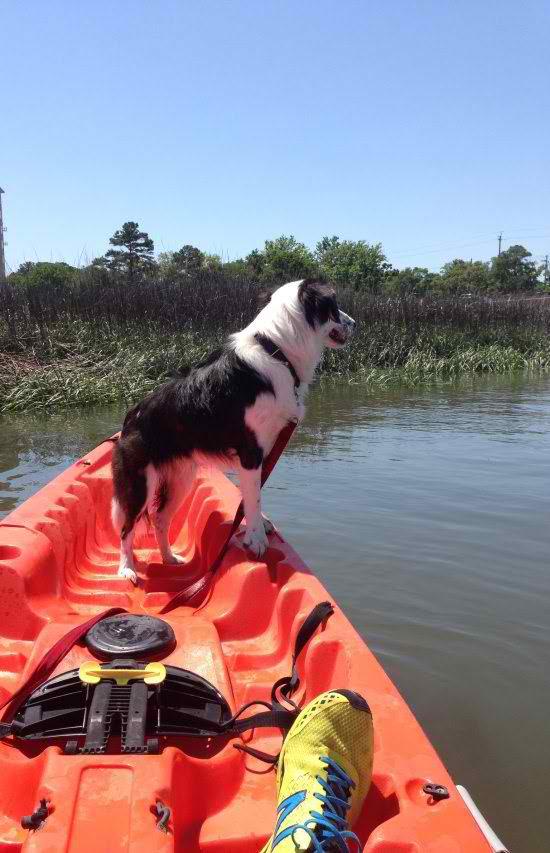 life-ruff-get-dog-401