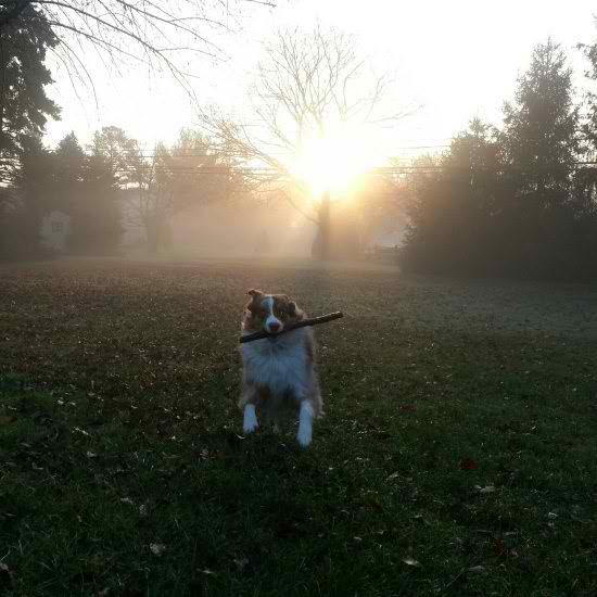 life-ruff-get-dog-461