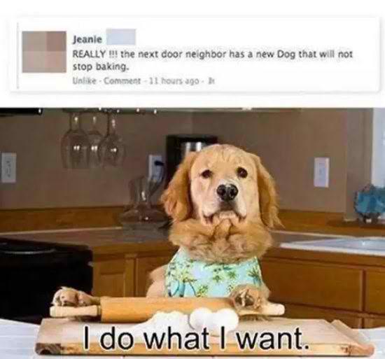 life-ruff-get-dog-521