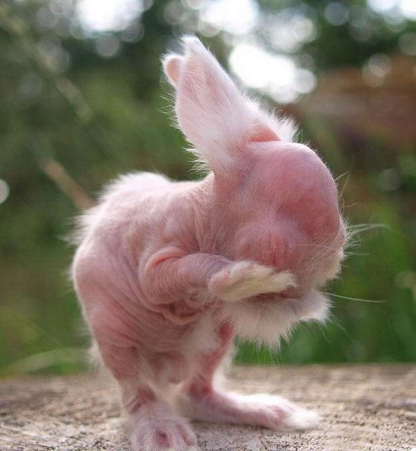 hairless-bald-animals-2