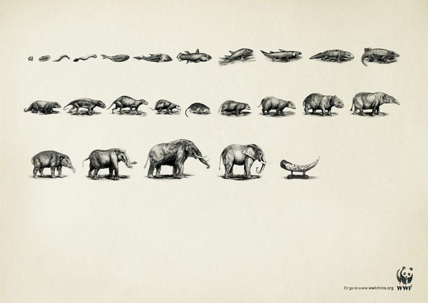 public-social-ads-animals-57
