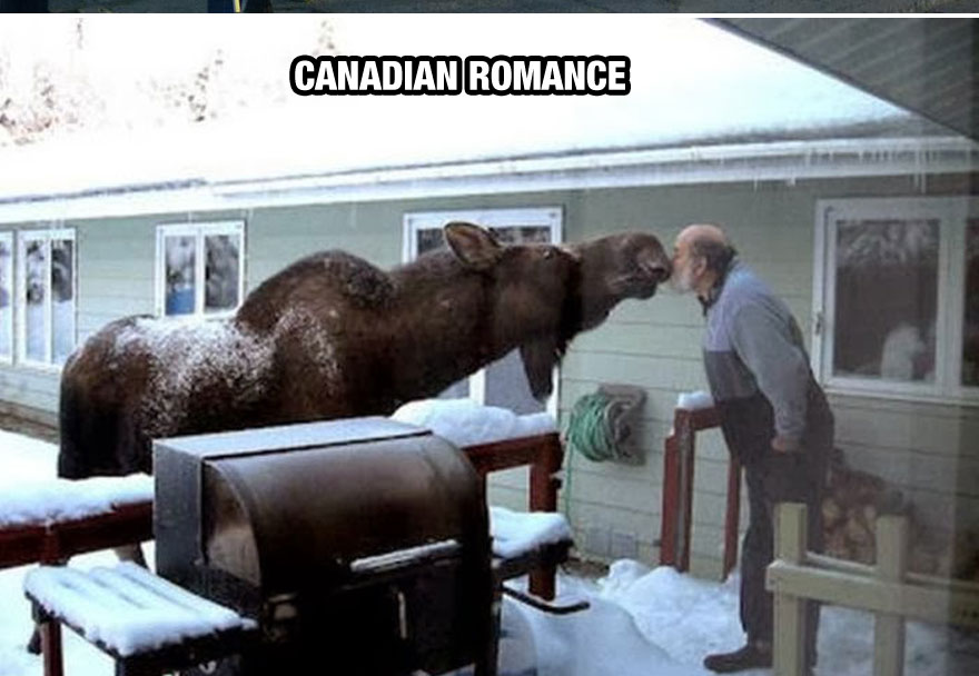 funny-things-Canada-different-moose-romance