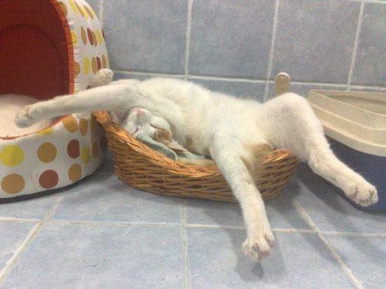cat-nap-12