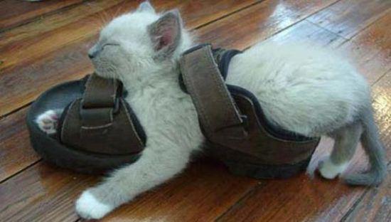 cat-nap-13