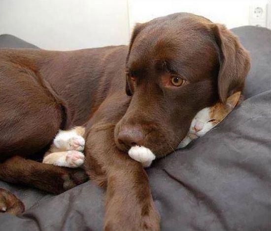 cat-nap-14