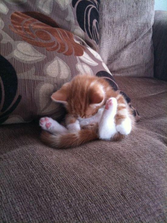 cat-nap-16