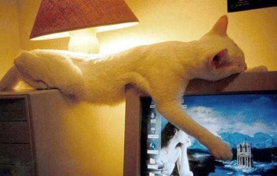 cat-nap-17