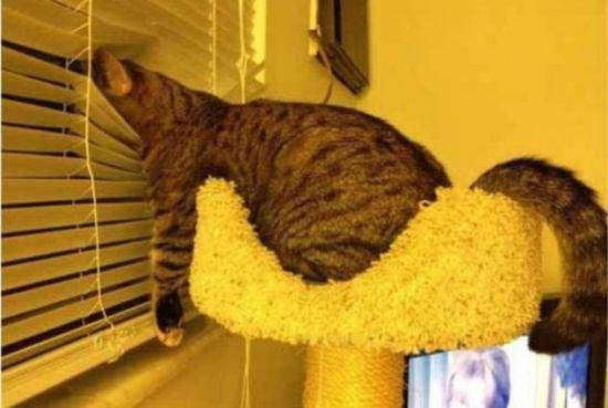 cat-nap-19