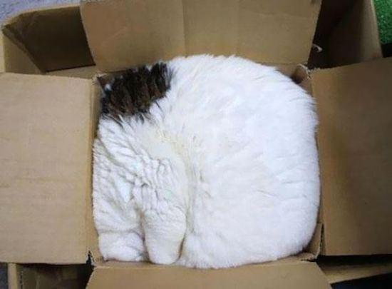 cat-nap-21