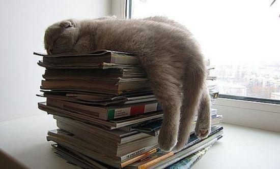 cat-nap-22