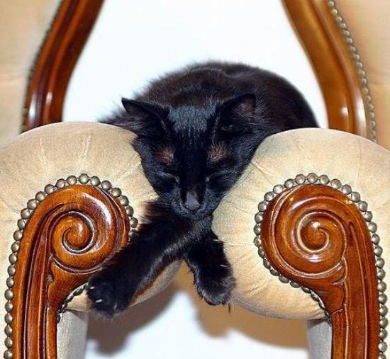 cat-nap-24