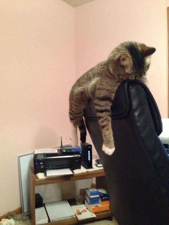 cat-nap-25