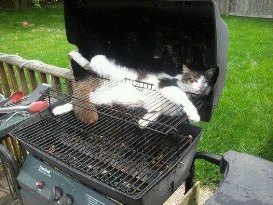 cat-nap-27