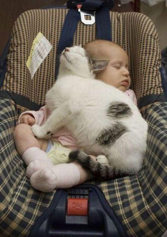 cat-nap-28