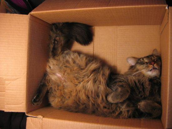 cat-nap-3
