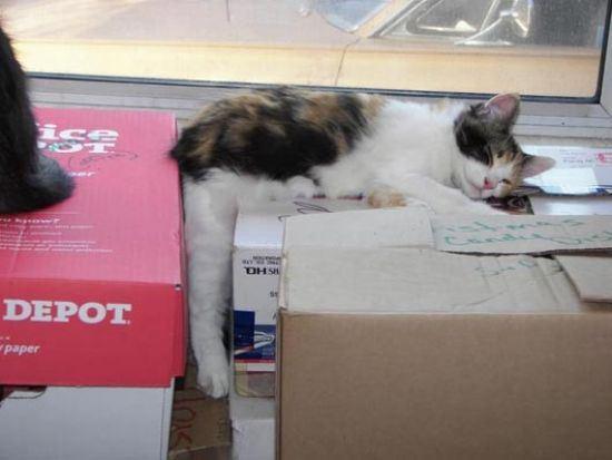 cat-nap-6