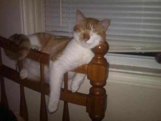 cat-nap-7