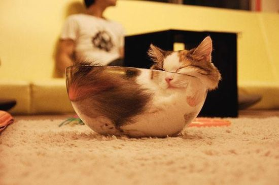 cat-nap-8