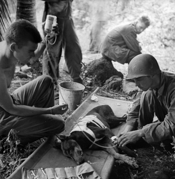21.) American soldiers treat an injured dog during WWII, 1944.