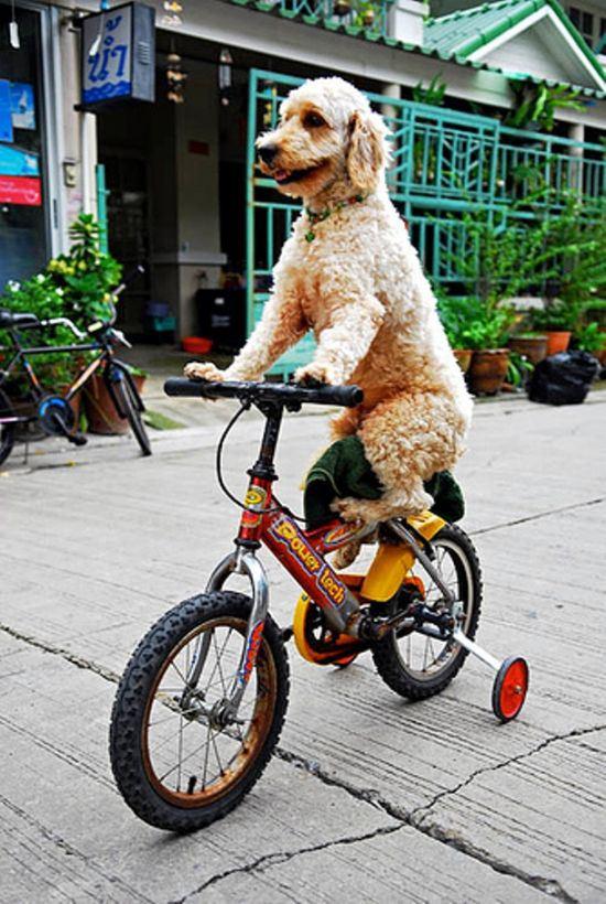 dog-people-13
