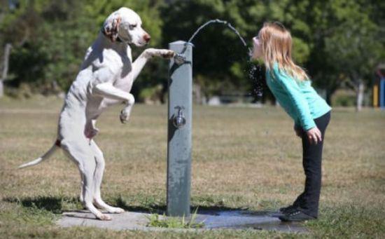 dog-people-22