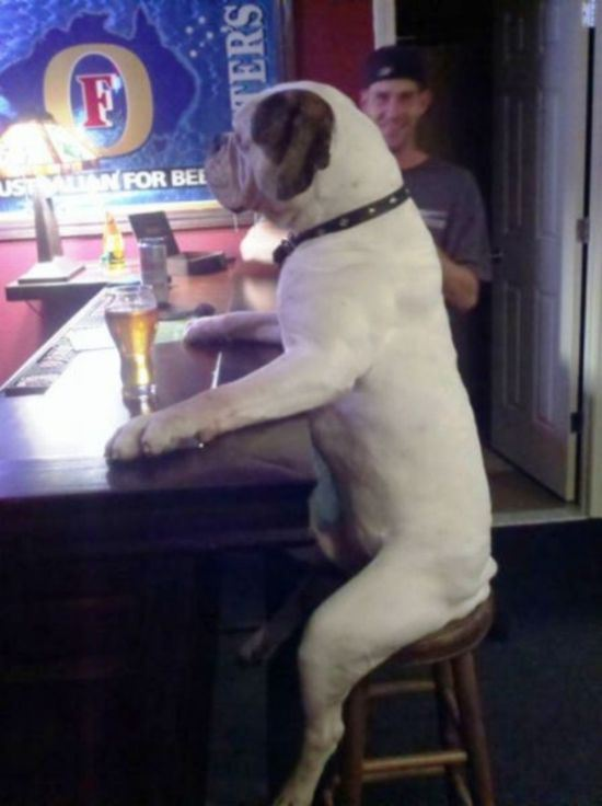 dog-people-7