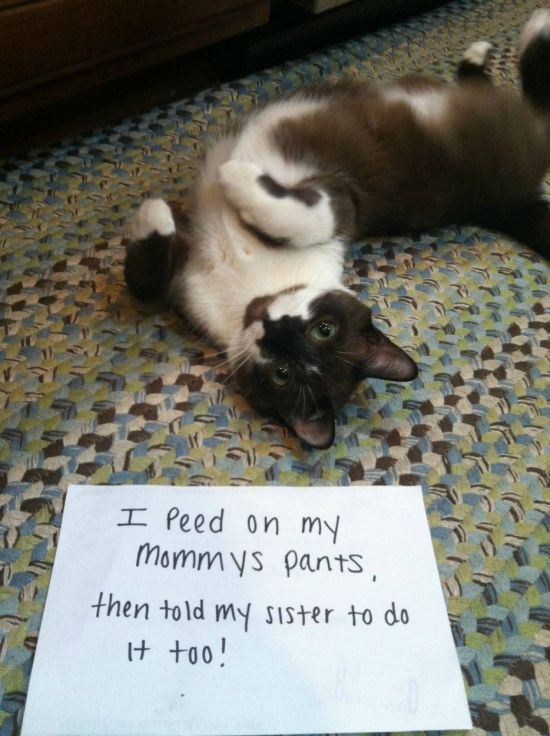 confession-cat-12