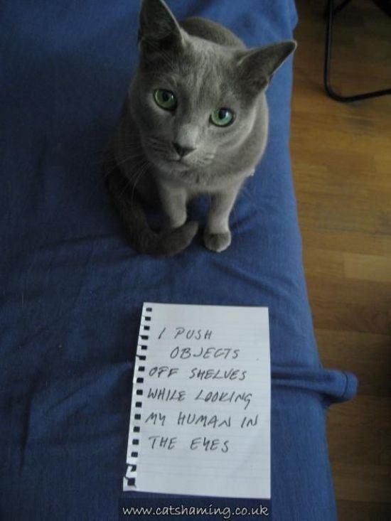 confession-cat-15