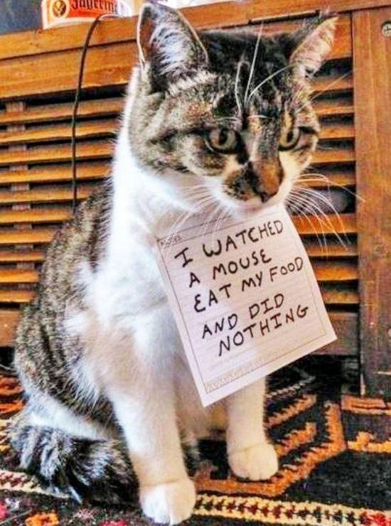 confession-cat-17
