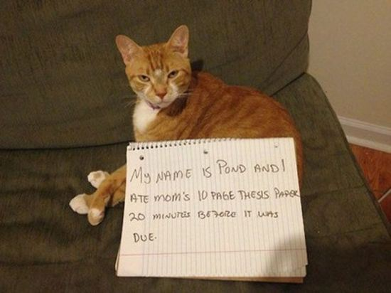 confession-cat-19