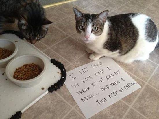 confession-cat-20