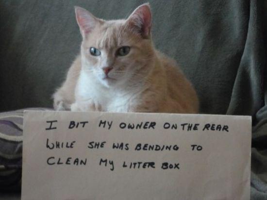 confession-cat-24