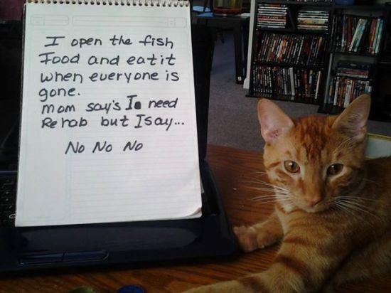 confession-cat-25