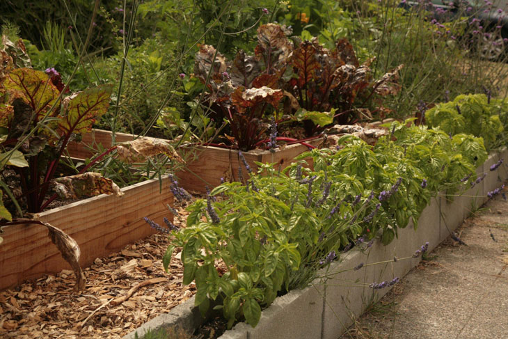 cool-plants-lawn-basil-blocks