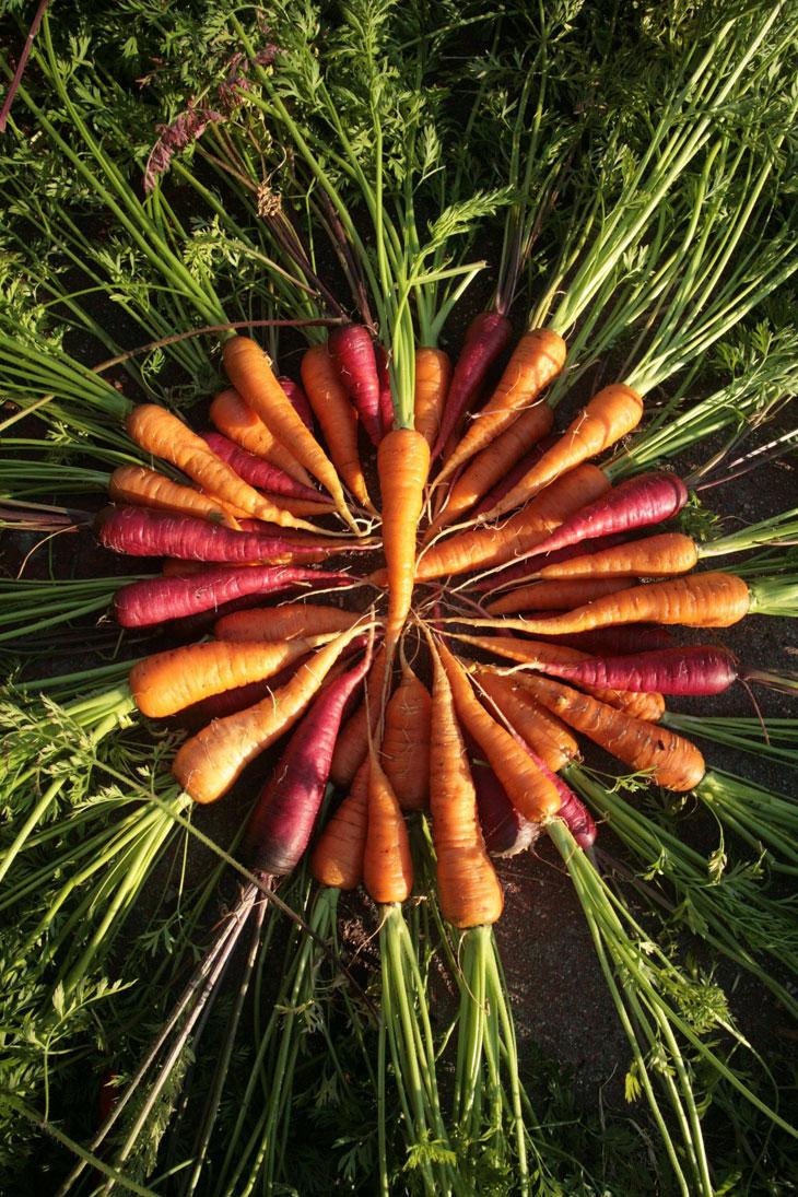 cool-plants-lawn-carrots-green