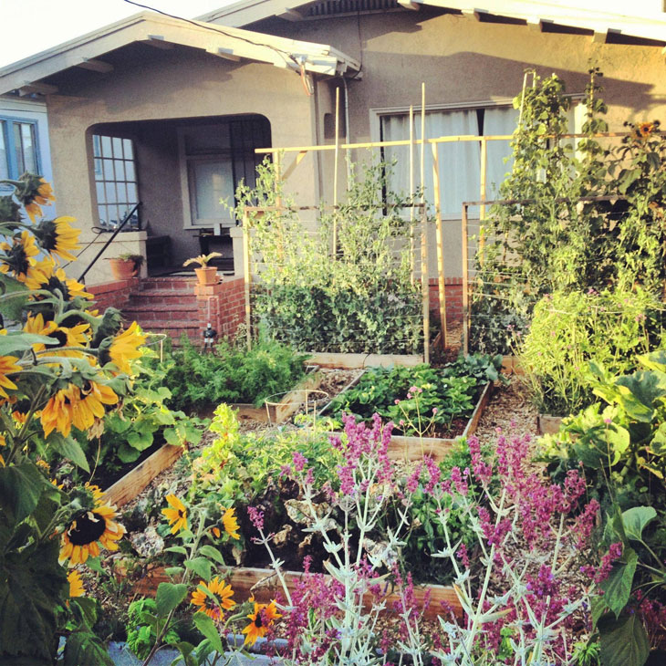 cool-plants-lawn-flowers-house